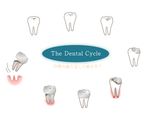The Dental Cycle